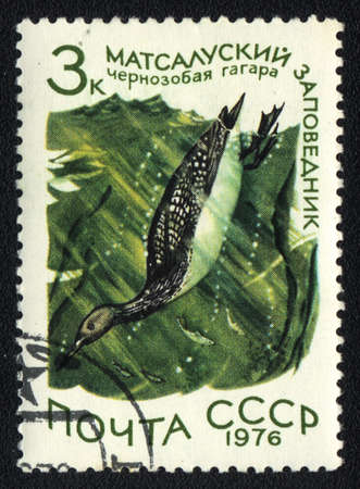 USSR - CIRCA 1976  A stamp printed in USSR  shows Black-throated Loon in Matsalu Nature Reserve, from series National reserve, circa 1976 Stock Photo - 13840629