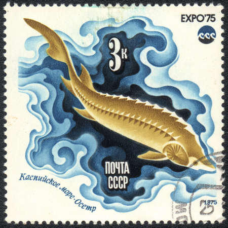 USSR - CIRCA 1975: A stamp printed in USSR  shows fish - Caspian sturgeon, from series
