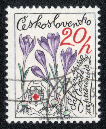CZECHOSLOVAKIA - CIRCA 1979  A stamp printed in CZECHOSLOVAKIA   shows Crocus,  circa 1979