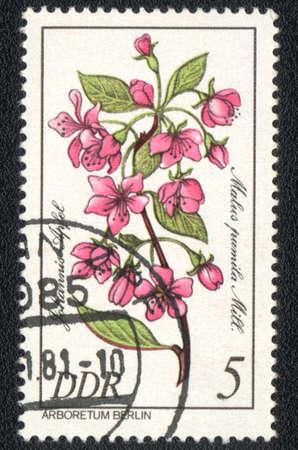 ddr: DDR - CIRCA 1981  A stamp printed in DDR  shows Paradise apple   Malus pumila , circa 1981 Editorial