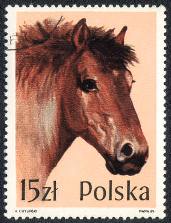 POLAND - CIRCA 1989  A stamp printed in POLAND  shows Portrait of a  brown heavyweight horse, from series, circa 1989