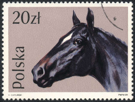 perforated stamp: POLAND - CIRCA 1989  A stamp printed in POLAND  shows Portrait of a black horse, from series, circa 1989