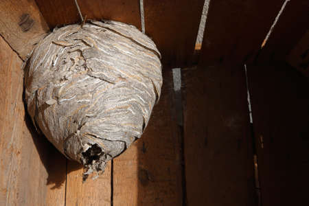 Hornet's nest in wooden box photo