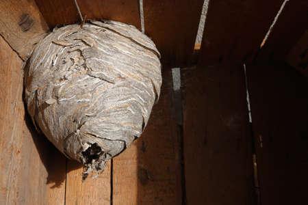 Hornets nest in wooden box Stock Photo