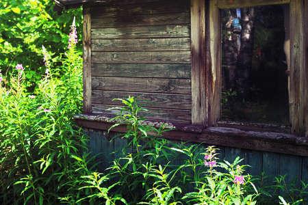 derelict: Epilobium near the derelict rural house