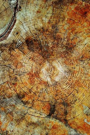 crosscut: Texture of birch stump Stock Photo