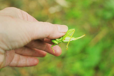 Grasshopper in the hand of people