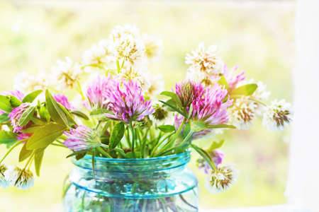 red clover: Clovers in the glass jar against a background of the window