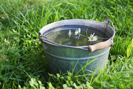 A wild daisy flower floats in a bucket full of clean water that is standing in the grass