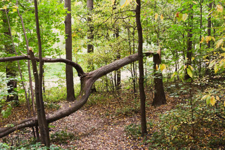 Broken tree in the park in the autumn