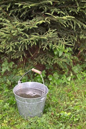 Metal bucket with rain water stand in the wet grass under a fir-tree 免版税图像