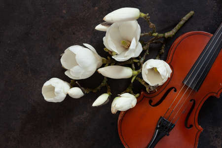 Old violin and blossoming magnolia brances. Top view, close-up on dark vintage background