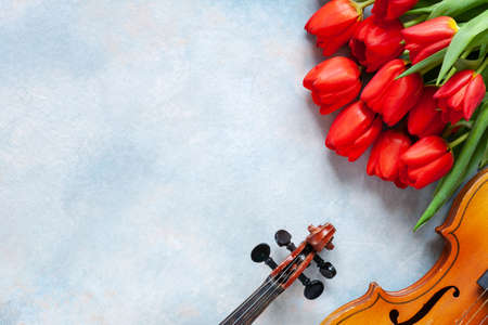 Two Old violins and bouquet of red tulips. Valentine day, 8 March concept. Top view, close-up on blue sky concrete background