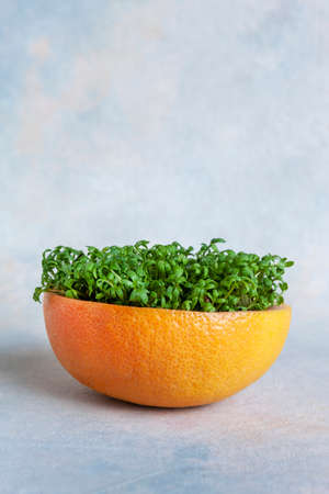 Watercress Salad microgreens grown in bright orange grapefruit peel on a blue background
