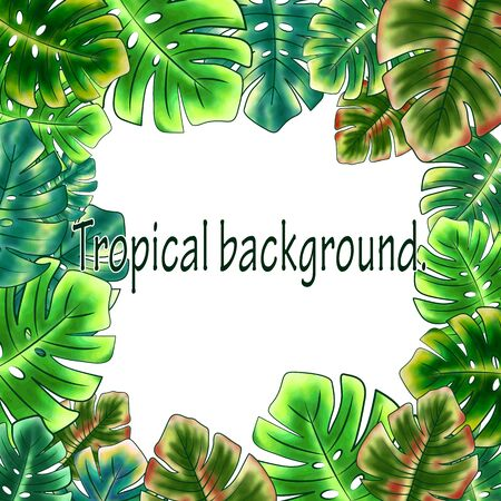 Frame of bright tropical leaves, floral background from monstera leaves, white background. Fashionable and glamorous decoration of any of your bold advertising projects.