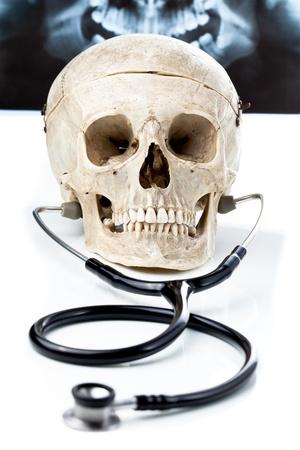 estudiantes medicina: Cráneo humano con un estetoscopio.