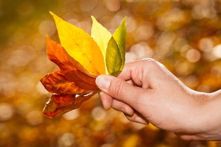 Hand in possesso di foglie d'autunno