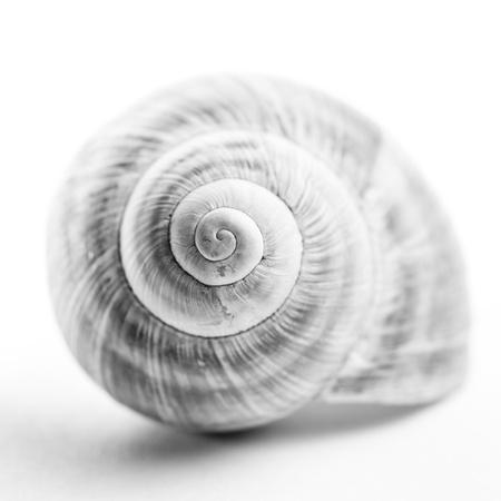 Snail shell   Shallow depth of field