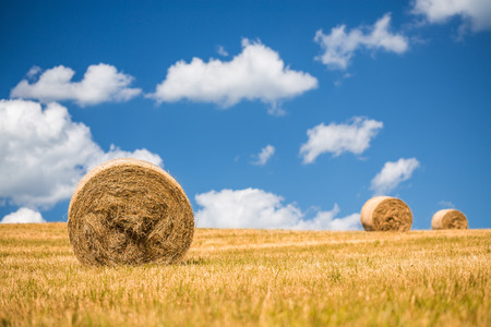 A field with straw bales after harvest