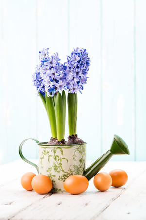 Blue Hyacinth in a watering can and easter eggs.