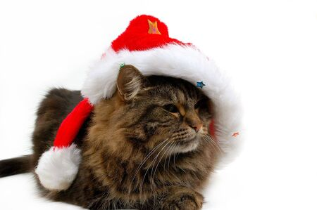 catlike: cute cat with christmas bonnet close-up