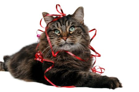 catlike: cute cat christmas or birthday gift close-up