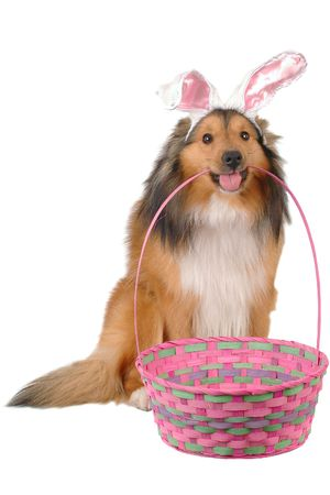 dog with basket and easter rabbit ears close-up Stock Photo