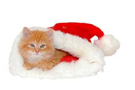 catlike: red kitten in christmas bonnet close-up