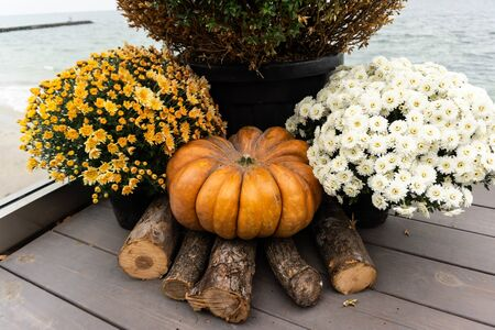 Autumn composition with ripe pumpkin flowers, wood decks firewood . Thanksgiving holiday concept. Autumn harvest, fall vegetables. texture for design