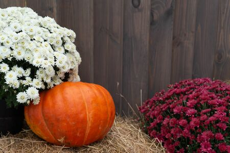 Beautiful autumn composition with ripe pumpkins, flowers, wood decks, firewood, straw on a background of wood. Thanksgiving holiday concept. Autumn harvest, fall vegetables. texture for design