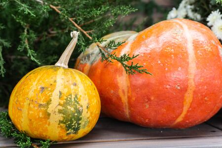 Beautiful autumn composition with ripe Orange and yellow pumpkins on a background of greenery, green grass, bush. Stand on a wooden base.