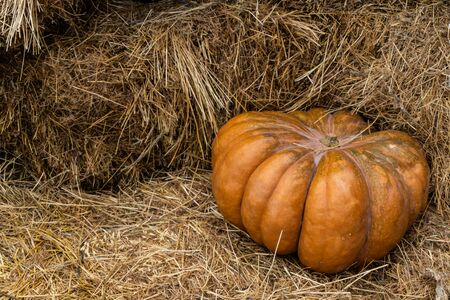 Beautiful autumn composition with ripe pumpkins on a straw. Thanksgiving holiday concept. Autumn harvest, fall vegetables. texture for design