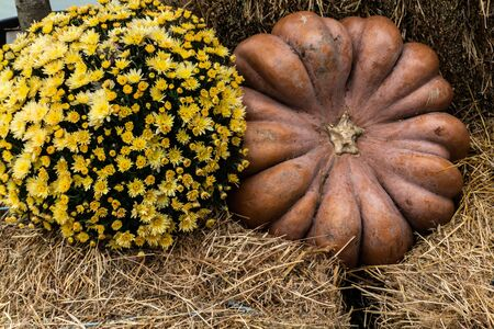 Beautiful autumn composition with ripe pumpkins and flowers on a straw. Thanksgiving holiday concept. Autumn harvest, fall vegetables. texture for design