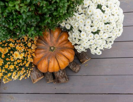 Beautiful autumn composition with ripe pumpkin and flowers on a background of wood. Thanksgiving holiday concept. Autumn harvest, fall vegetables. texture for design