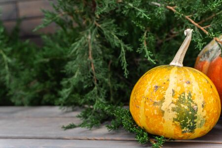 Beautiful autumn composition with ripe Orange and yellow pumpkins on a background of greenery, green grass, bush. Stand on a wooden base. Thanksgiving holiday Halloween concept. Autumn harvest, fall v