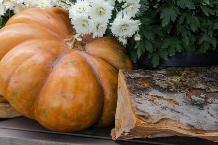 Beautiful autumn composition. close-up Wooden cuts of a deck of firewood and autumn white flowers, a large pumpkin with green grass. background, firewood pattern tree. Thanksgiving holiday Halloween c