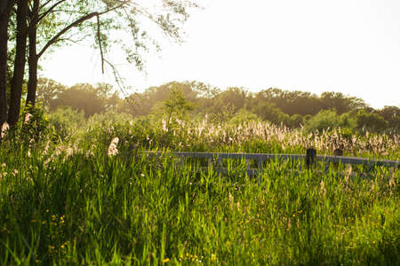 Green meadow with fresh grass, reeds and a small wooden white bridge during golden hour in the spring.