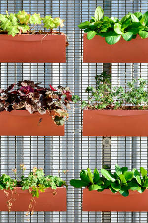Planters attached to a fence. Orange flower pots with different plants. Plants planted in containers, vertical garden idea.