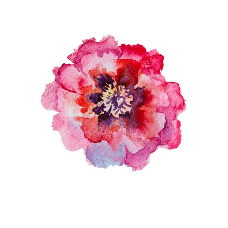 Pink red blooming peony watercolor isolated on white background