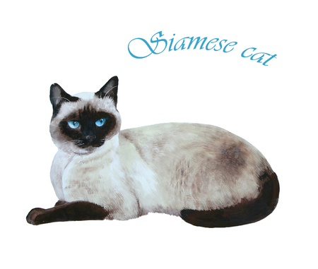 siamese: Grey cat lying on bed acrylic mural Stock Photo