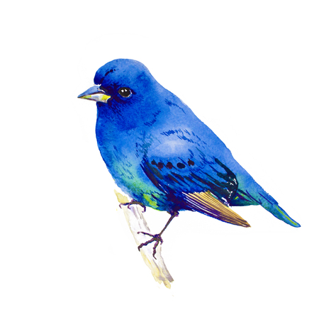 Watercolor Bluebird On Branch Hand Painted Illustration isolated on white background