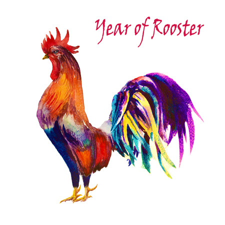 laying egg: Rooster. Rooster Year. Chinese New Year of the Rooster. Watercolor Rooster New Year card. Stock Photo