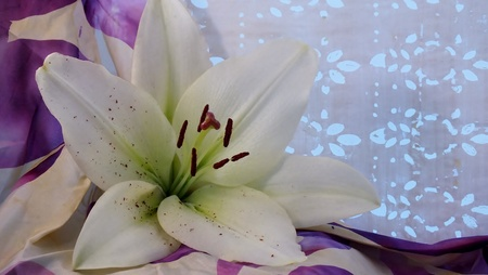 laden: Pollen laden lily, with silk and white patterned background