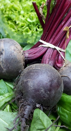 Bunch of beetroot bound with elastic band, photo