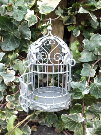 French style shabby chic metal bird cage  hanging on ivy covered wooden fence photo