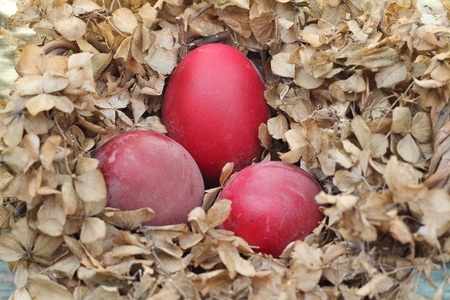 Shabby Chic Easter Nest - dyed red eggs in a nest of dried hydrangea flowers, photo