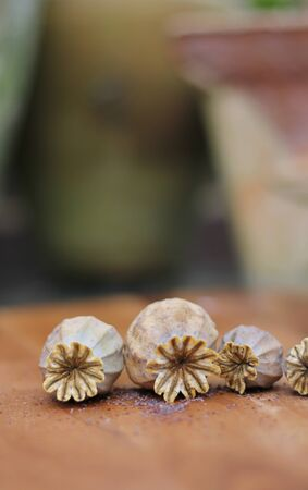 dried poppy heads with seeds on wooden board, blurred ceramic plant pots in background photo