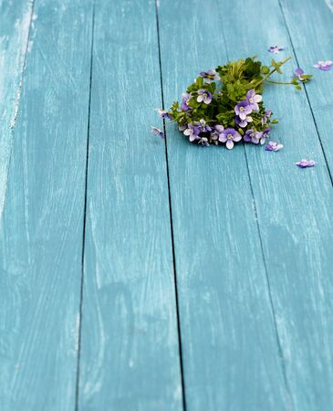 A tiny forget me not posy, Delicate, small spring flowers on blue  painted wooden floor boards  photo