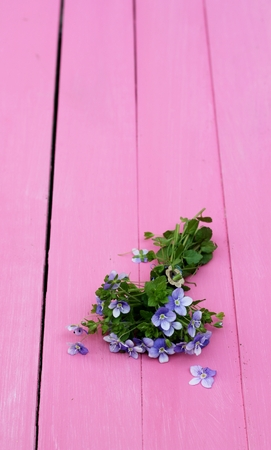 A tiny forget me not posy, Delicate, small spring flowers ion pink painted wooden floor boards  photo