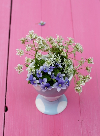 Delicate, small spring flowers in a blue spotty egg cup on pink painted wooden floor boards  photo